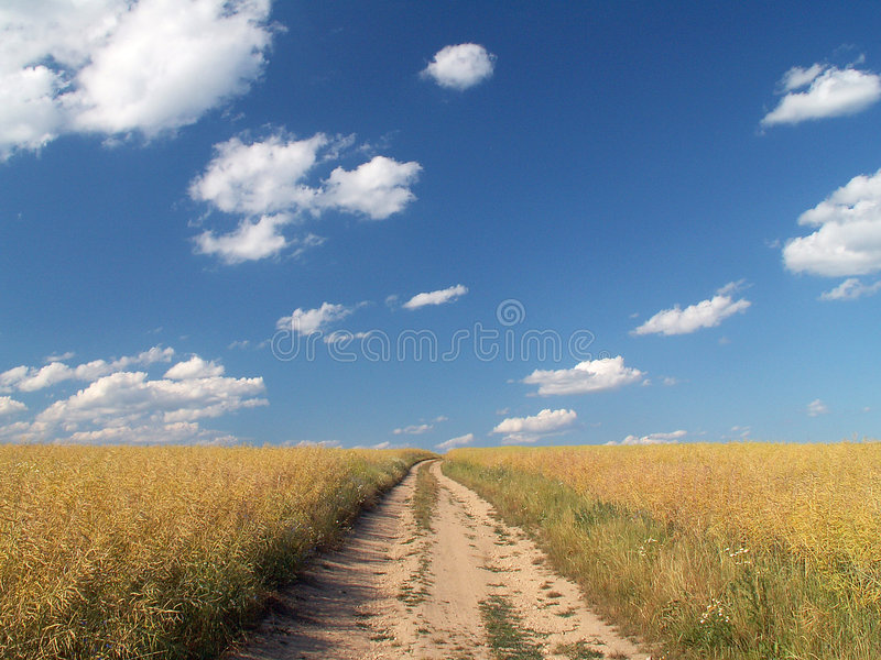 Way through the field royalty free stock photo