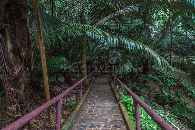 Way in forest stock photography