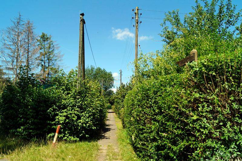 The way forward between hedges. The way forward on a footpath between hedges on a summer day royalty free stock image