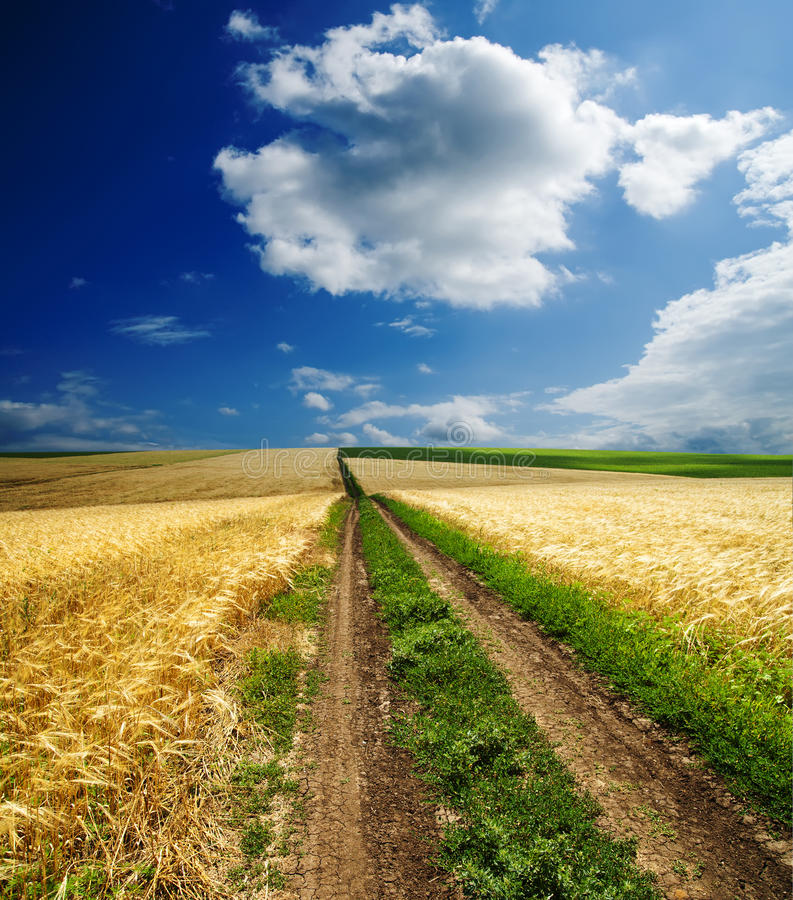 Download Way in golden field stock image. Image of countryside - 19694207