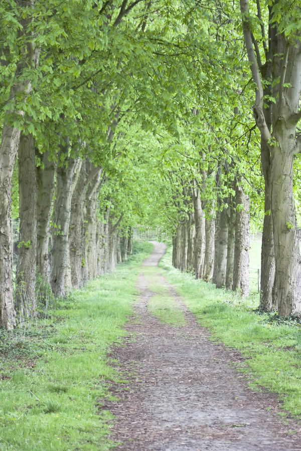 Download Way in a Green Wood stock image. Image of beautiful, leaf - 21882273