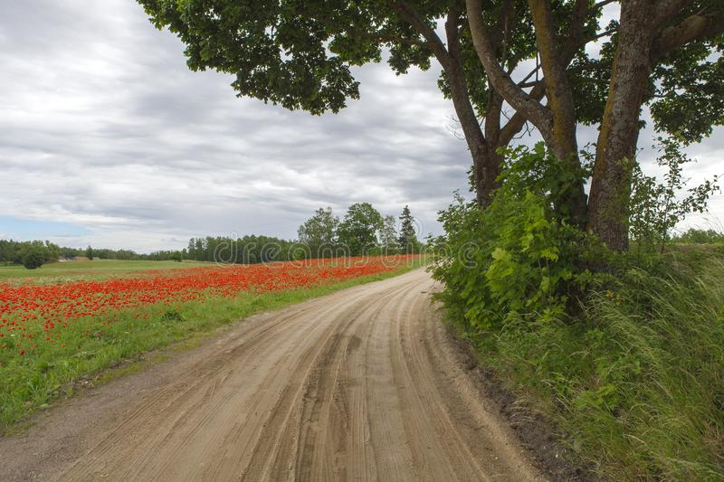 Way near blossoming red field stock image