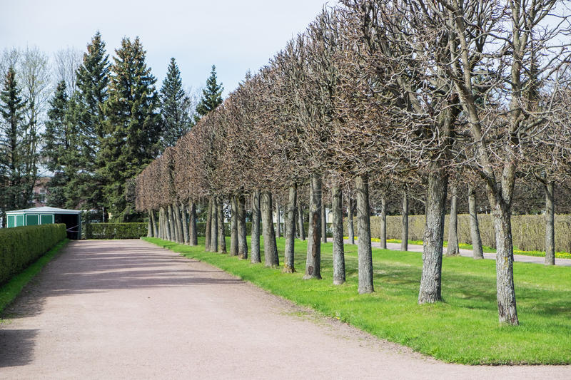 Way in public park royalty free stock photography