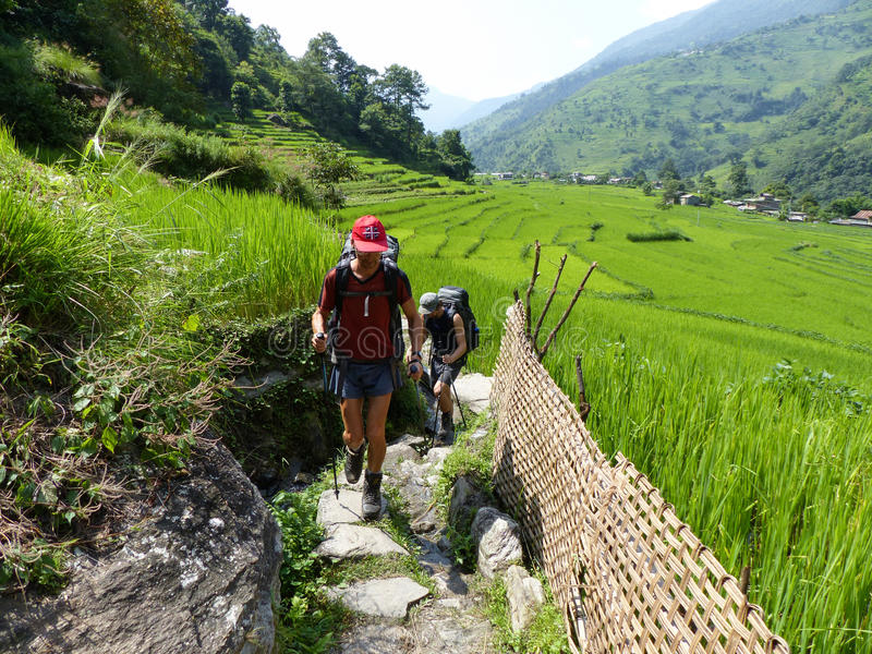 Way through rice fields, Nepal. Rice fields near Ghermu - Marsyangdi river valley - Annapurna Circuit trek in Nepal royalty free stock image