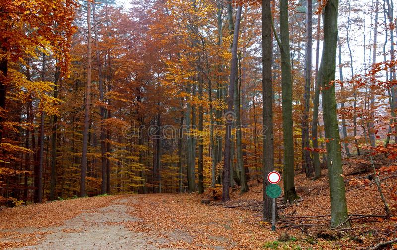 Way through a state owned forest in autumn. Way through the state owned forest in autumn, Pressbaum, Austria royalty free stock image