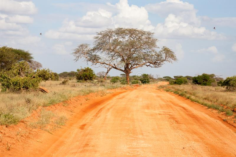 Way throught the savannah with red soil royalty free stock images