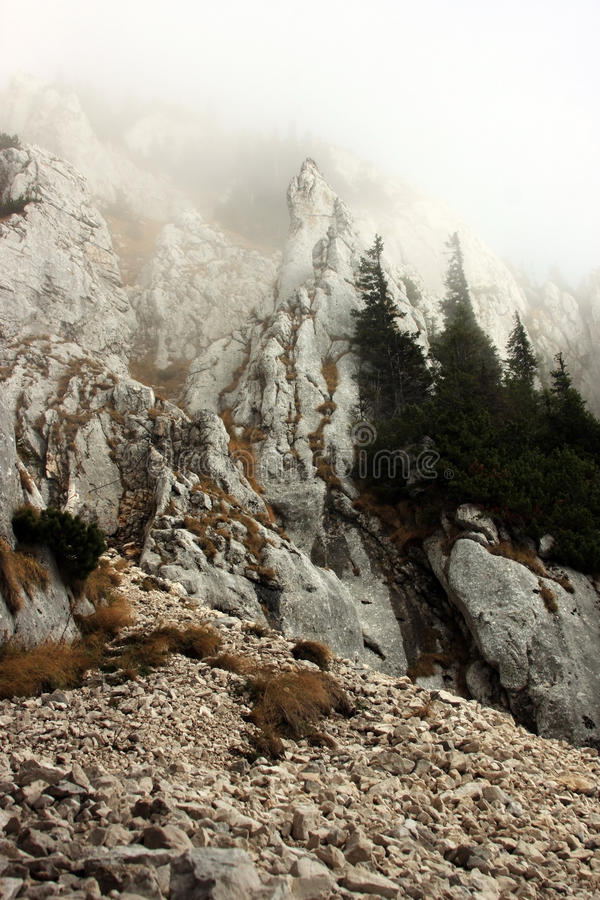Download The way up the mountain stock photo. Image of forest - 27545680