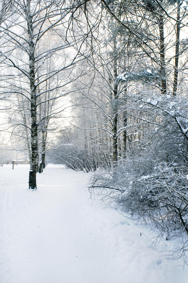 Download Way In The Winter Park Stock Image - Image: 12635001