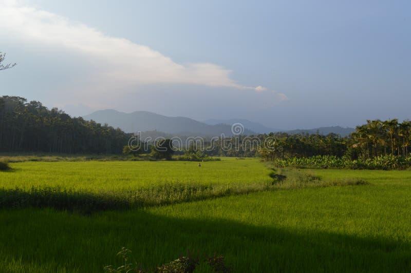 Wayanad, Керала стоковое фото rf