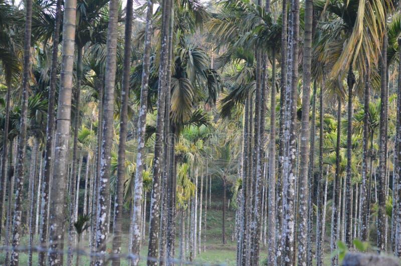 Wayanad Kerala, Indien arkivfoto