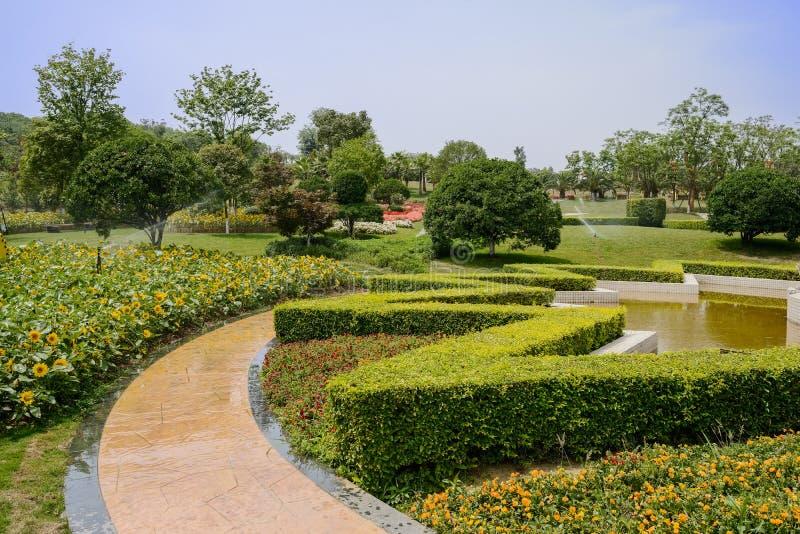 Waysidesolrosor och buskar under bevattning i solig sommar arkivfoton