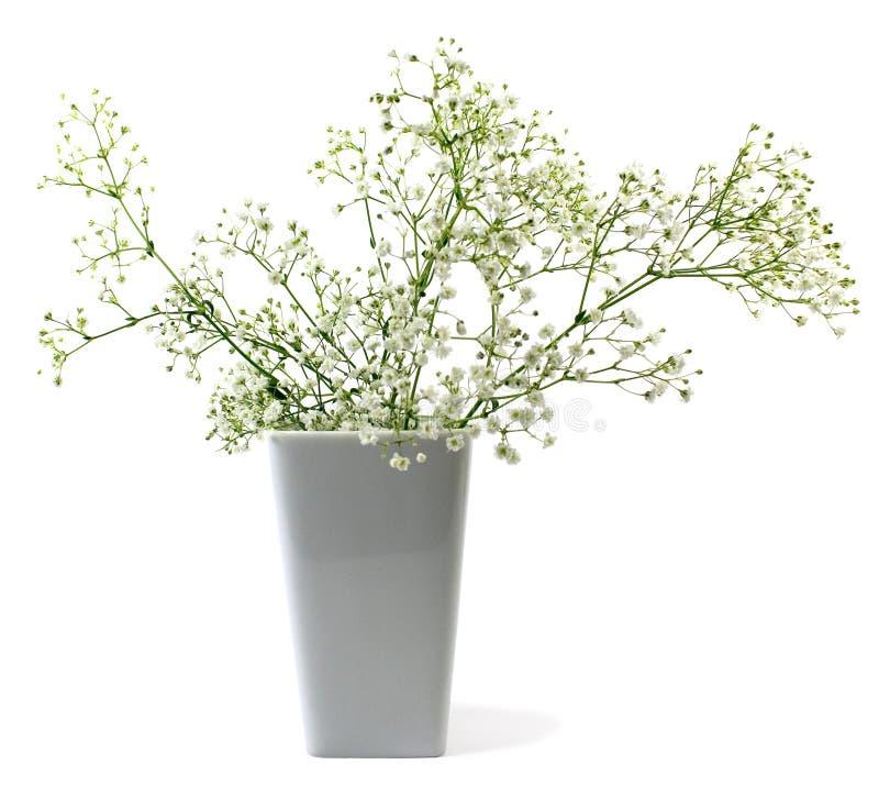 waza kwiat obrazy stock