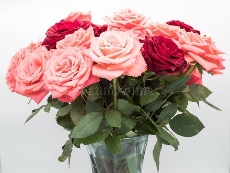Waza róże Na Białym tle zdjęcie stock