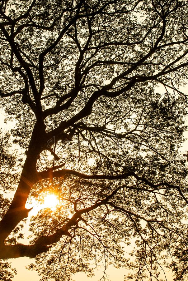 Wazig zon bloemenpatroon stock foto's