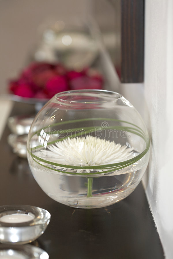 wazowy chryzantema white obrazy royalty free