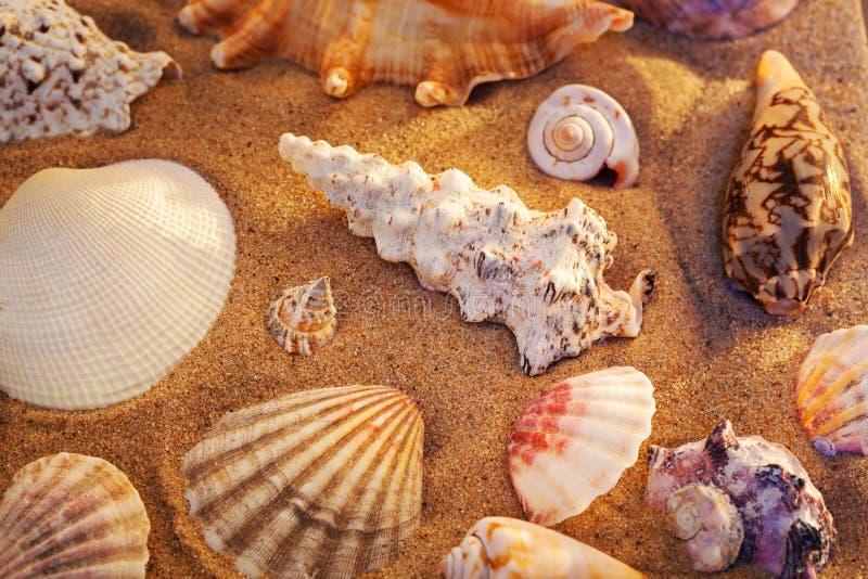 wciąż żyć seashells obraz royalty free