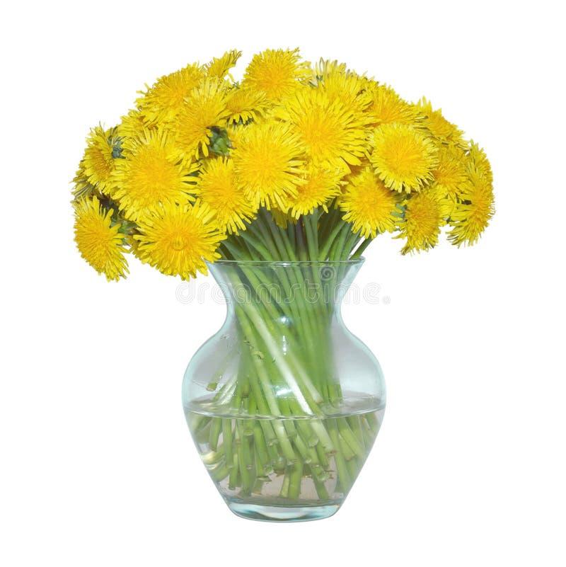 Wciąż żyć szklani wazowi żółci dandelions odizolowywający na białym tle zdjęcie royalty free
