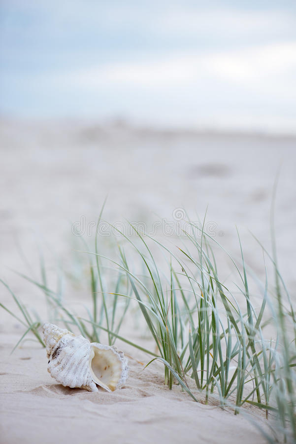 wciąż życia seashell obrazy stock