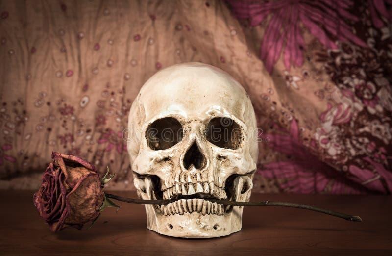 Wciąż życie biała ludzka czaszka z suchą czerwieni różą w zębach na woode obraz stock