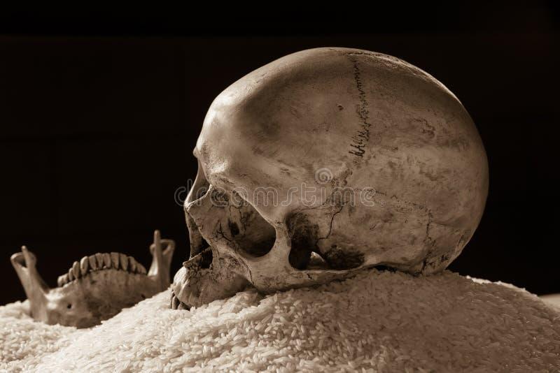Wciąż życie czaszka na ryż zdjęcie stock