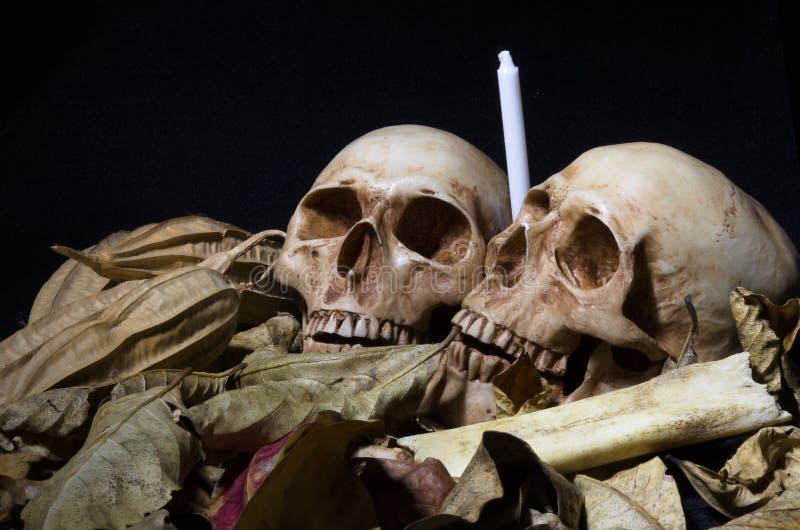 Wciąż życie dwa czaszki z wysuszonymi liśćmi, białą świeczką i bonem, zdjęcie royalty free