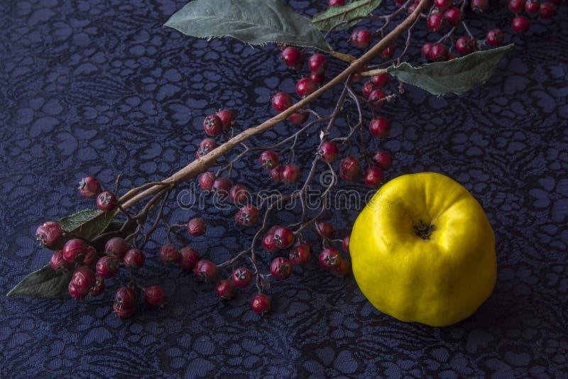 Wciąż życie - ikebany gałąź z wysuszonymi jagodami i pigwą zbliżenia tła szal z tkaniny żyje zdjęcie stock