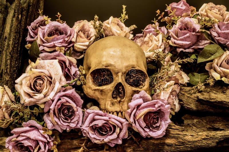 Wciąż życie ludzka czaszka z róży tłem obraz royalty free