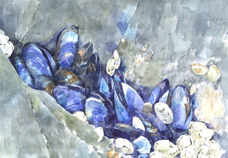 Wciąż życie obraz jaskrawi kobalt seashells na kamieniach, akwareli ilustracja royalty ilustracja