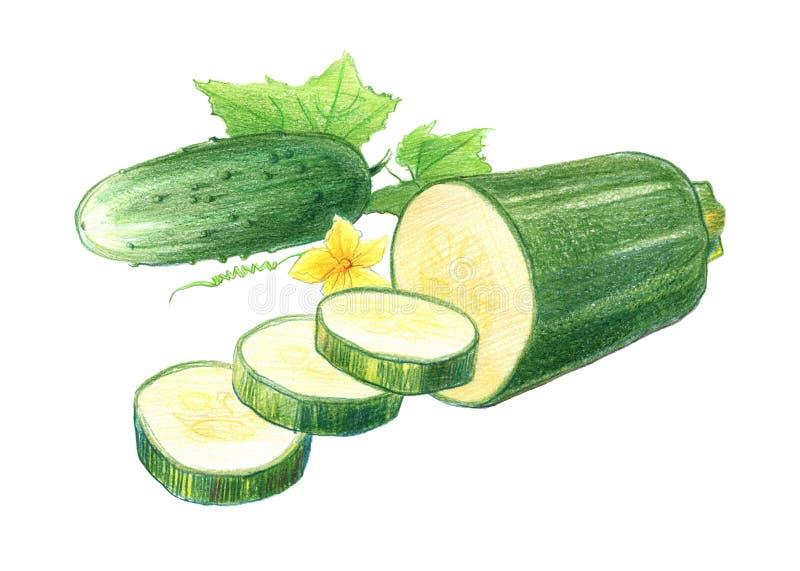 Wciąż życie ogórki i zucchini Rysuj?cy z barwionymi o??wkami, odizolowywaj?cymi na bia?ym tle ilustracja wektor