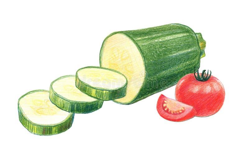Wciąż życie pomidory i zucchini Rysuj?cy z barwionymi o??wkami, odizolowywaj?cymi na bia?ym tle ilustracji