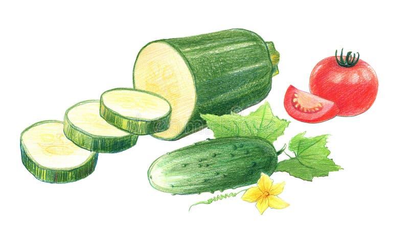 Wciąż życie pomidory, ogórki i zucchini, Rysuj?cy z barwionymi o??wkami, odizolowywaj?cymi na bia?ym tle royalty ilustracja