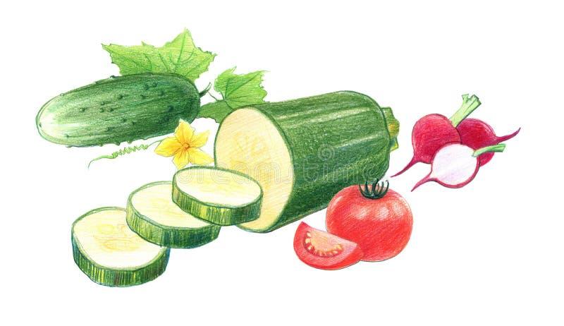 Wciąż życie pomidory, rzodkwie, ogórki i zucchini, Rysuj?cy z barwionymi o??wkami, odizolowywaj?cymi na bia?ym tle ilustracji