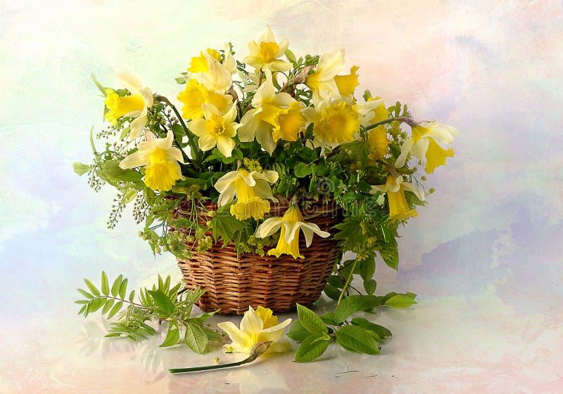 Wciąż życie wiosen daffodils w koszu fotografia royalty free