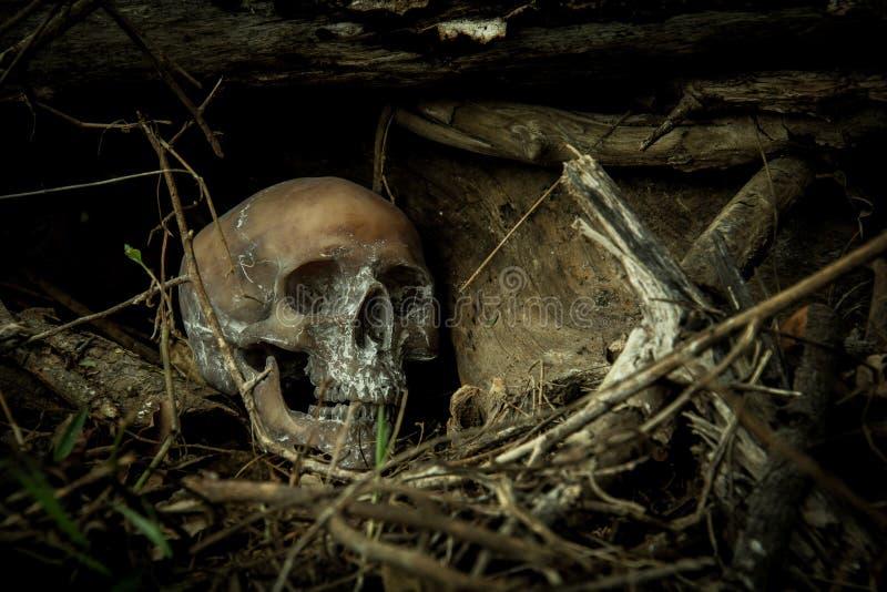 Wciąż życie z czaszką w lesie fotografia stock