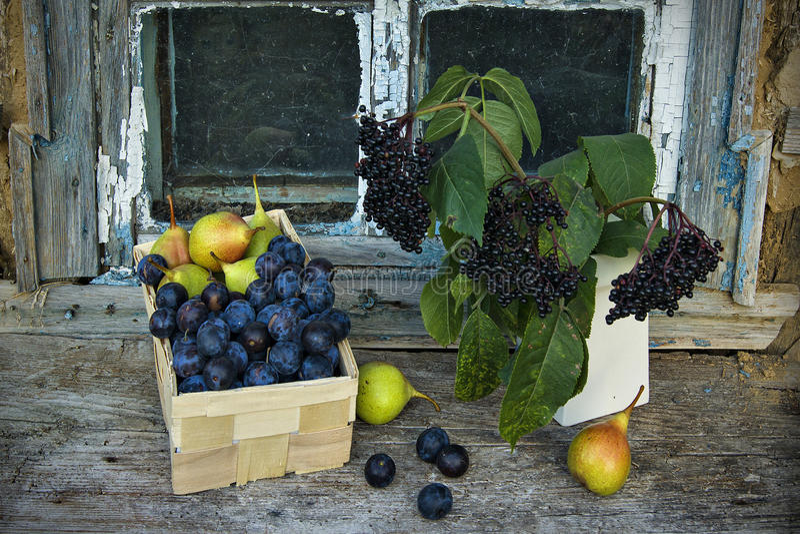 Wciąż życie z elderberry, bonkretami i śliwkami, zdjęcie stock