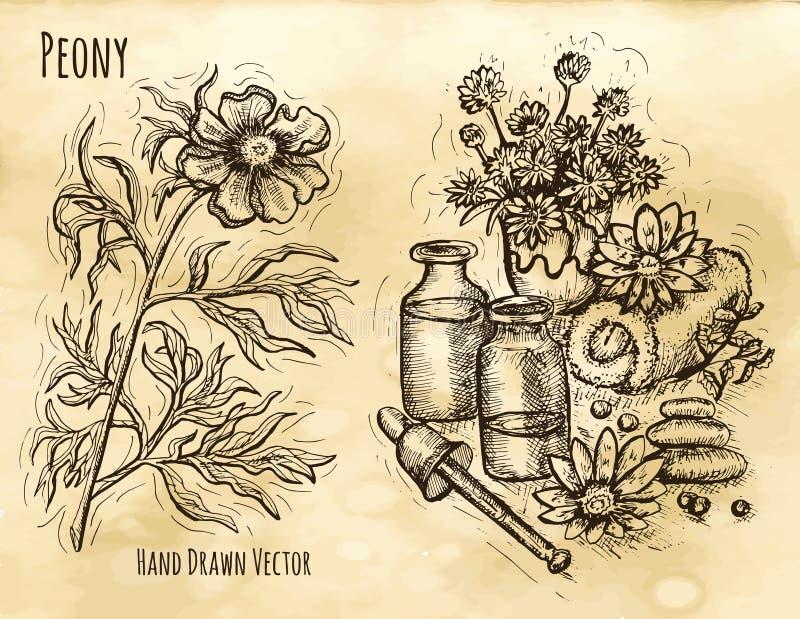Wciąż życie z ziołowymi kosmetykami i peonią royalty ilustracja