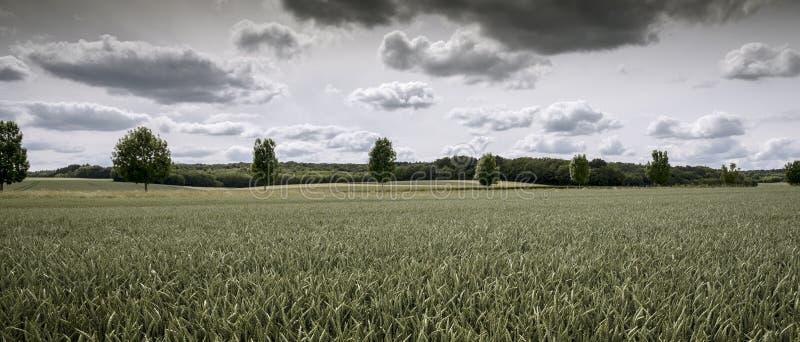 Wciąż zieleni pszeniczni pola pod chmurami zdjęcia stock
