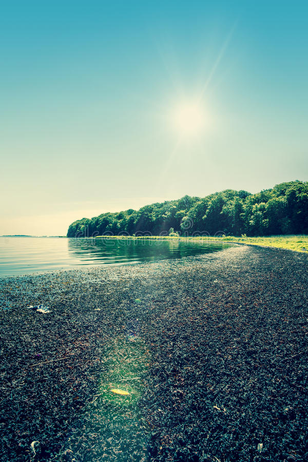 wcześniej brzegu jeziora rano lato fotografia stock