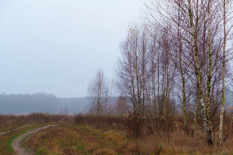Wczesna jesień w kraju, mglisty ranek w polu zdjęcie royalty free