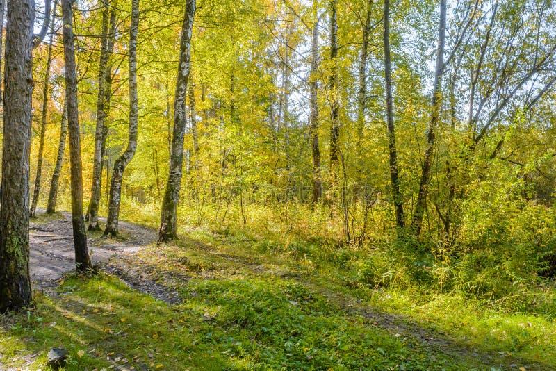 Wczesna jesień w lesie fotografia royalty free