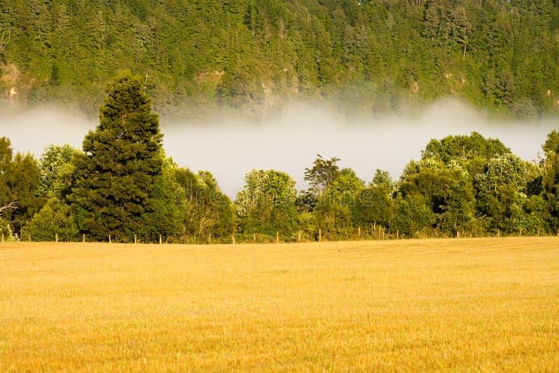Wczesna mgła w łące, Villarrica, Chile zdjęcie stock