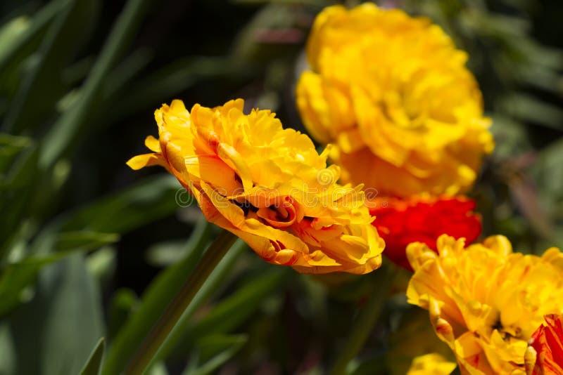 wczesna ogrodowa wiosna obrazy stock