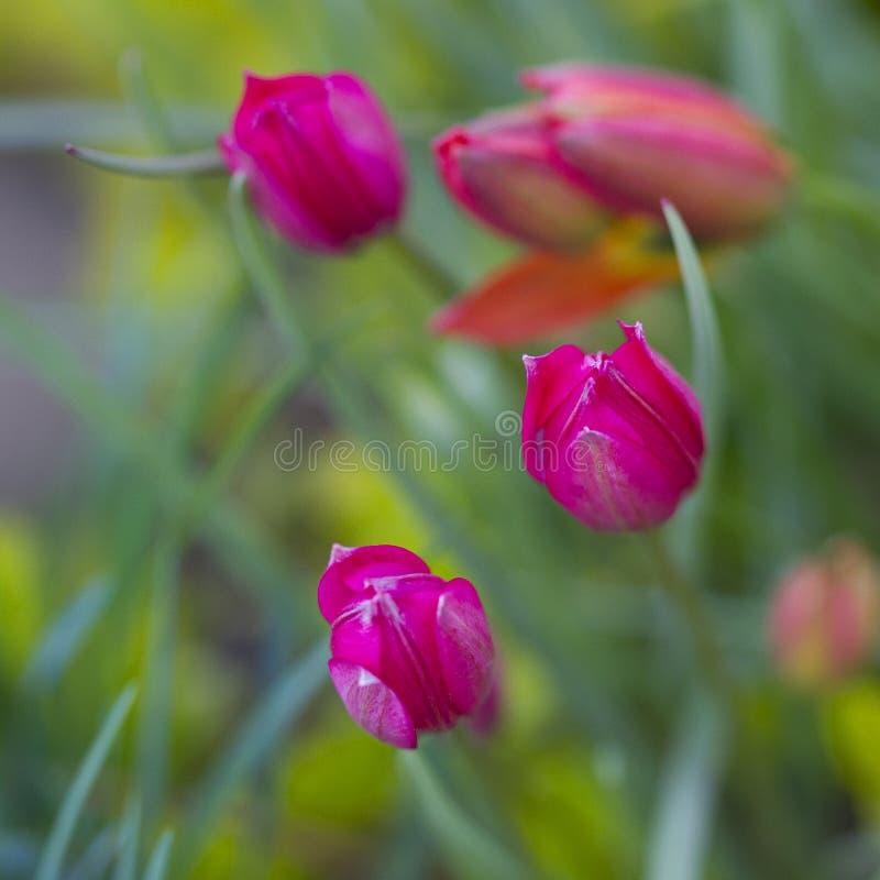 wczesna ogrodowa wiosna zdjęcie royalty free