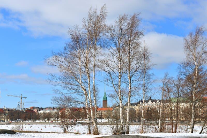 Wczesna wiosna w Helsinki Brzozy na Uunisaari wyspie obrazy stock