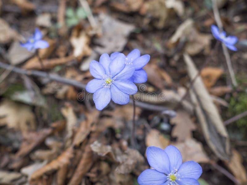 Wczesna wiosna w lesie obrazy royalty free