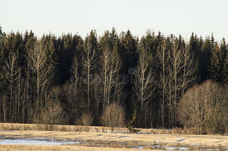 Wczesna zima w polach zdjęcia royalty free