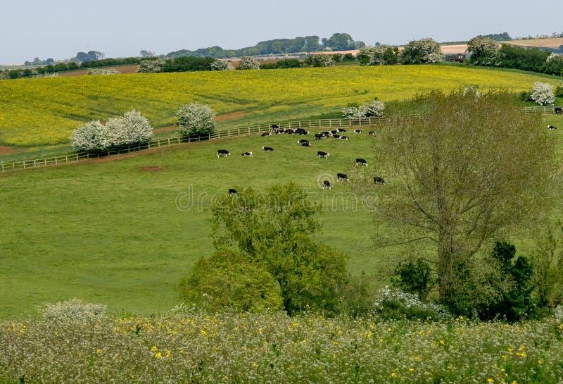 Wczesne lato widok toczna Angielska wieś zdjęcie royalty free