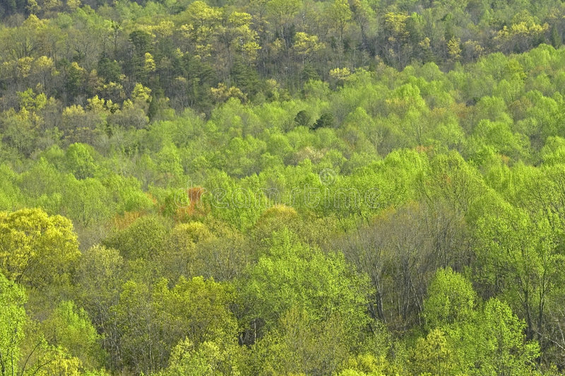 wczesne wiosen drzewa zdjęcie stock