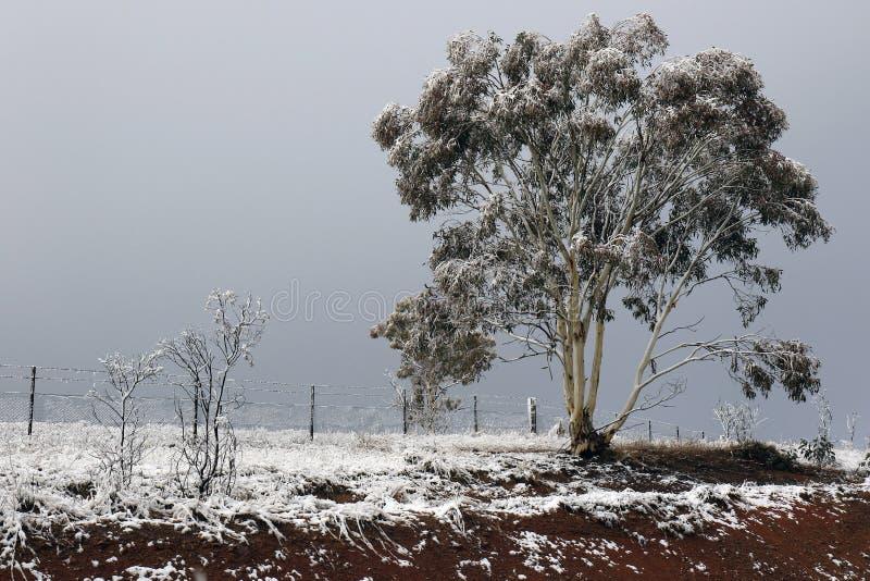 Wczesnego poranku śnieżny zaczynać topić obrazy royalty free