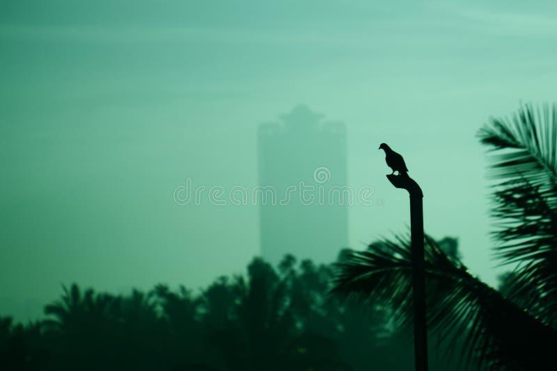 Wczesnego poranku ptak zdjęcia stock